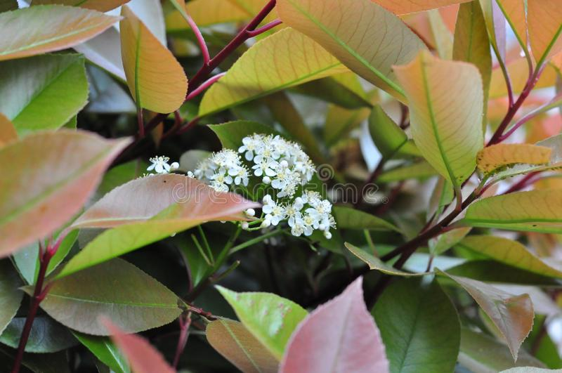 HD white flowers and green plants. HD natural flowers and green plants, HD big picture detail of nature natural plants plants royalty free stock images
