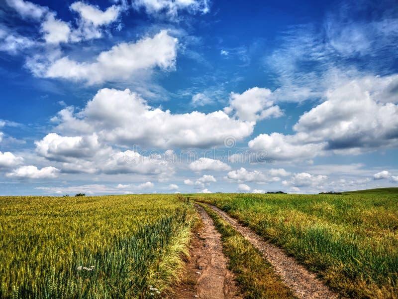 HDR领域自然风景背景 免版税库存图片