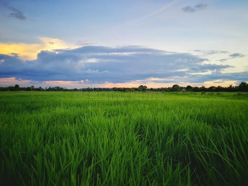 Beautiful view of rice paddy field during sunset in Malaysia. Nature composition. Hdr beautiful view rice paddy field sunset malaysia nature composition stock image