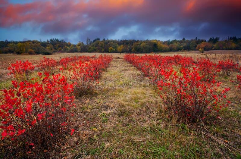 HDR czerwieni łąki obraz stock
