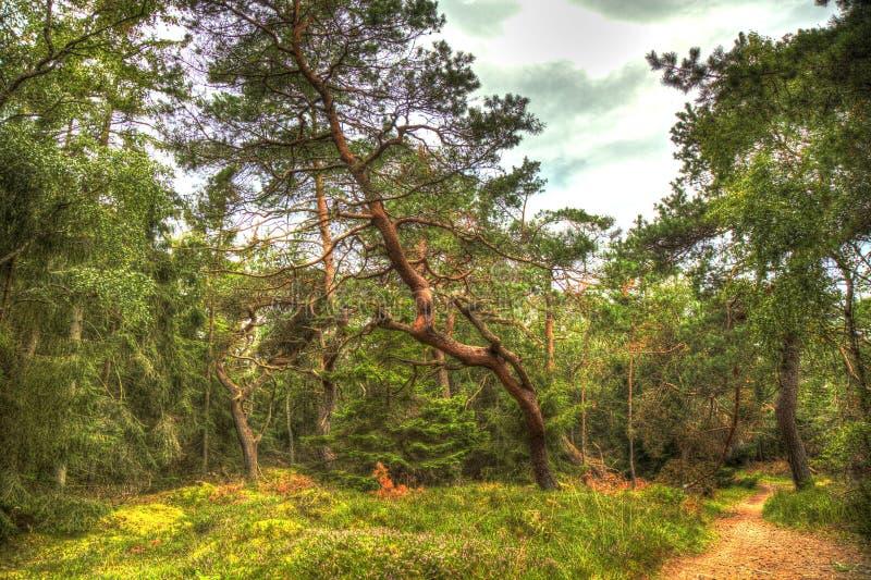 Download HDR dans les bois image stock. Image du deciduous, arbre - 76089507