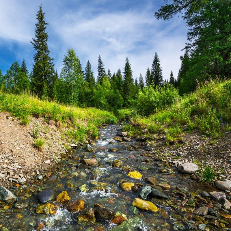 3 hdr g?rskiej zdj?? panoramy rzeka pionowe Gorny Altai, Rosja zdjęcie royalty free