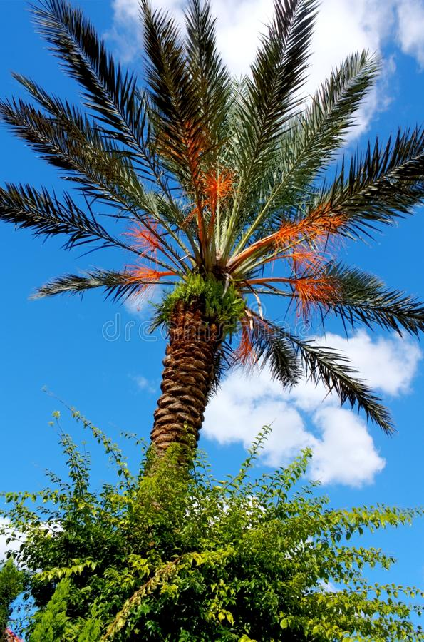 HDR Palm Tree Stock Photo