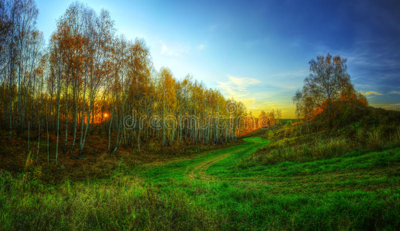 The HDR Panorama Of The Golden Late Autumn Forest Stock Image