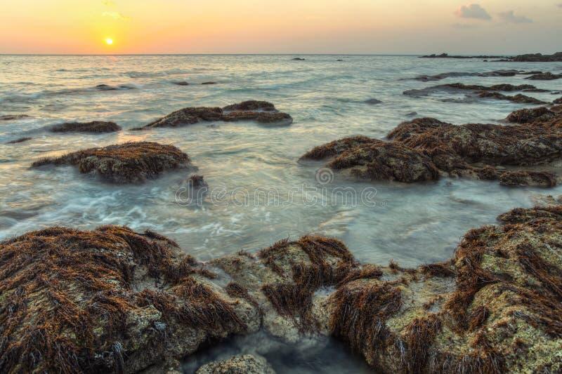 HDR skottet av havet som tvättar sig, vaggar dolt med alger royaltyfri bild