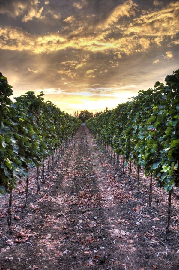 Hdr solnedgång på en vingård royaltyfri fotografi