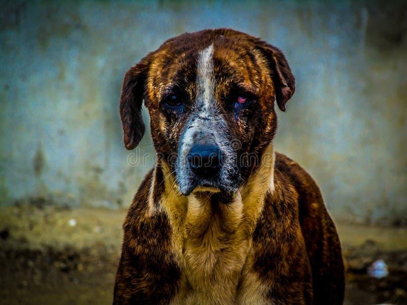 HDR van hond royalty-vrije stock afbeelding
