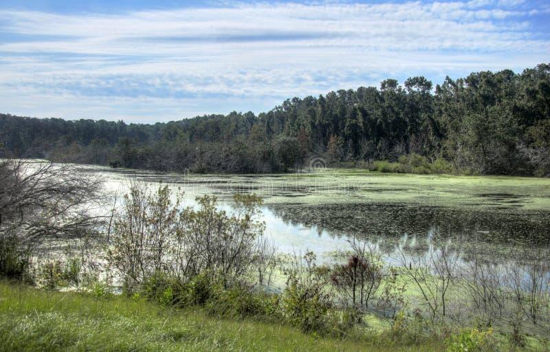 HDR vattenfågeldamm på fristaden för djurliv för Pickney ö den nationella, USA fotografering för bildbyråer