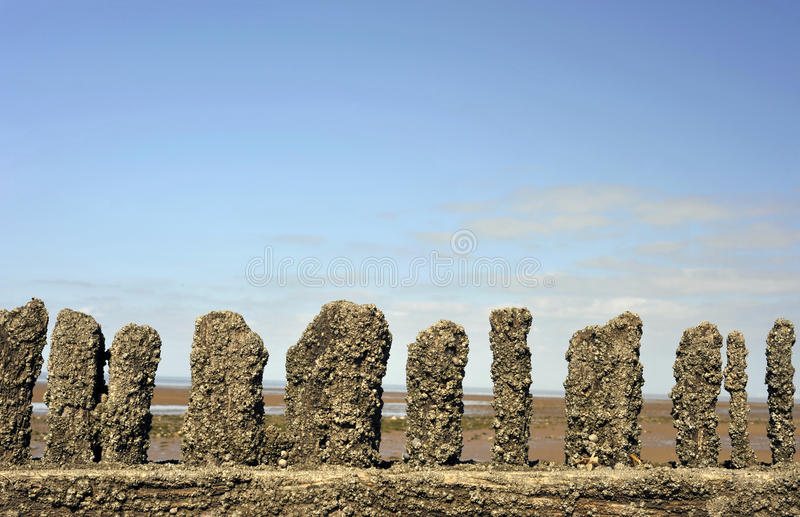 Heacham. Wooden breakers on a beach landscape at Heacham on the Norfolk coast royalty free stock images