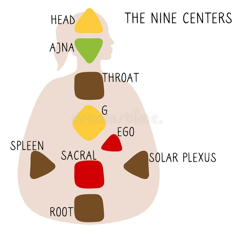 Free Head, Ajna, Throat, Ego, Solar Plexus, Sacral Root Spleen G Center Stock Image - 180237121