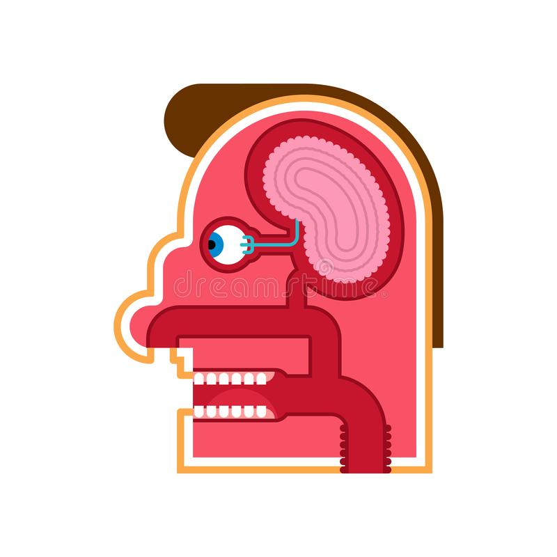 Head Anatomy cartoon Internal scheme. Brain and eye. Taste buds. Skull cut.  royalty free illustration