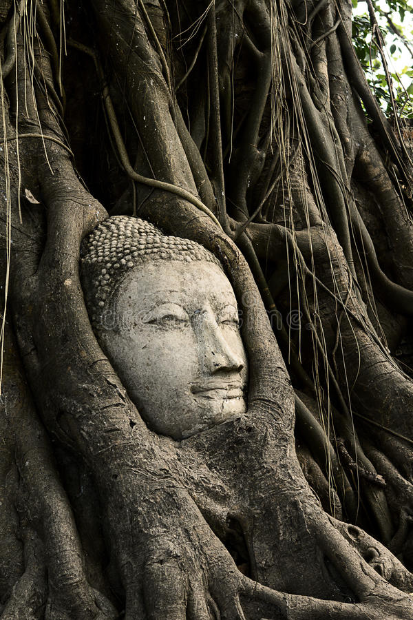 Download Head Ancient Buddha stock image. Image of monument, indochina - 31295669