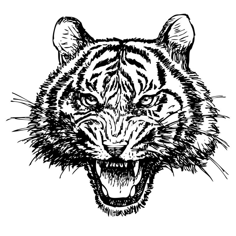 Head Of Angry Tiger Hand Drawn Stock Vector - Illustration ...