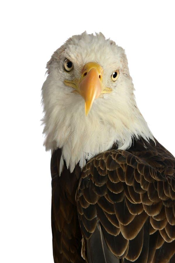 Download HEad of Bald Eagle stock image. Image of united, symbolic - 26902643