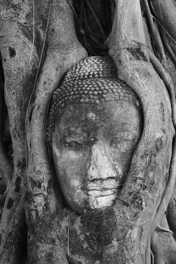 Download The head of Buddha stock image. Image of buddhist, religion - 20829799