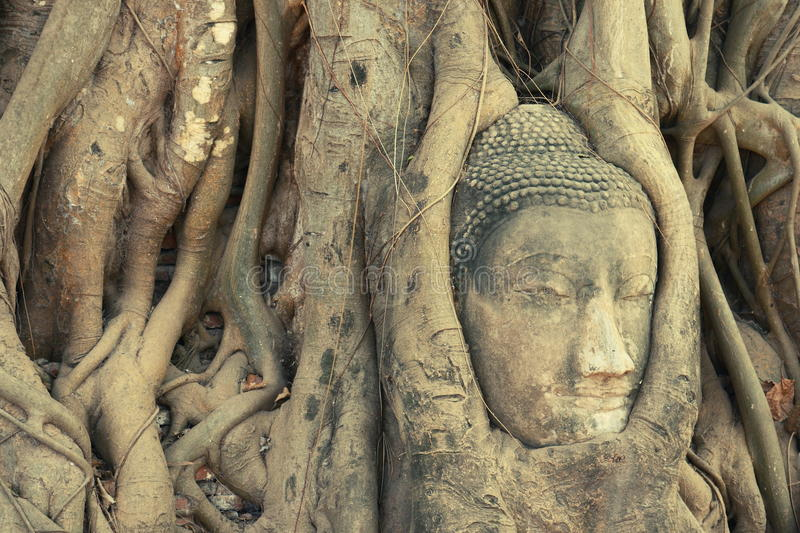 Head of Buddha statue entwined by roots. At Wat Phra Mahathat, Ayuthaya, Thailand stock photography
