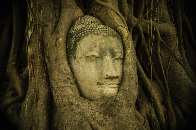 Head of Buddha statue in the tree roots, famous tourism spot of royalty free stock photos