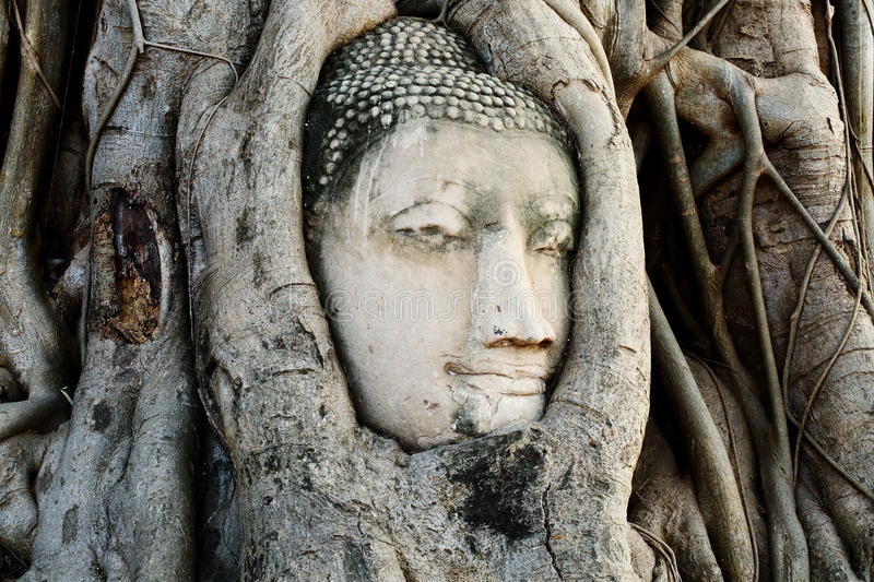 Head of Buddha Statue with the Tree Roots at Wat Mahathat, historic site of Thailand. royalty free stock photography