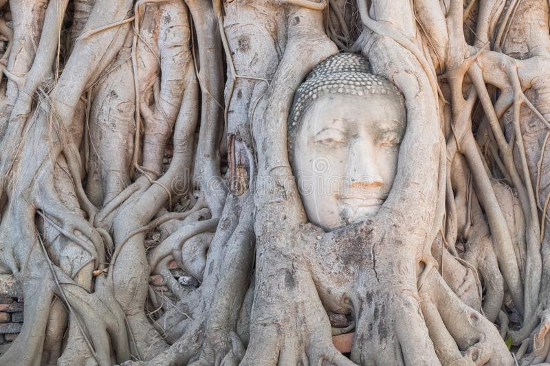 Head of Buddha statue in the tree roots at Wat Mahathat temple, royalty free stock photography