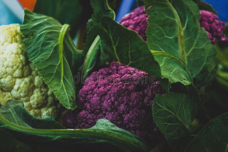 Head of cabbage a food is being produced in a sustainable, environmentally friendly and financially viable way. The family farm started changing in the early royalty free stock photos