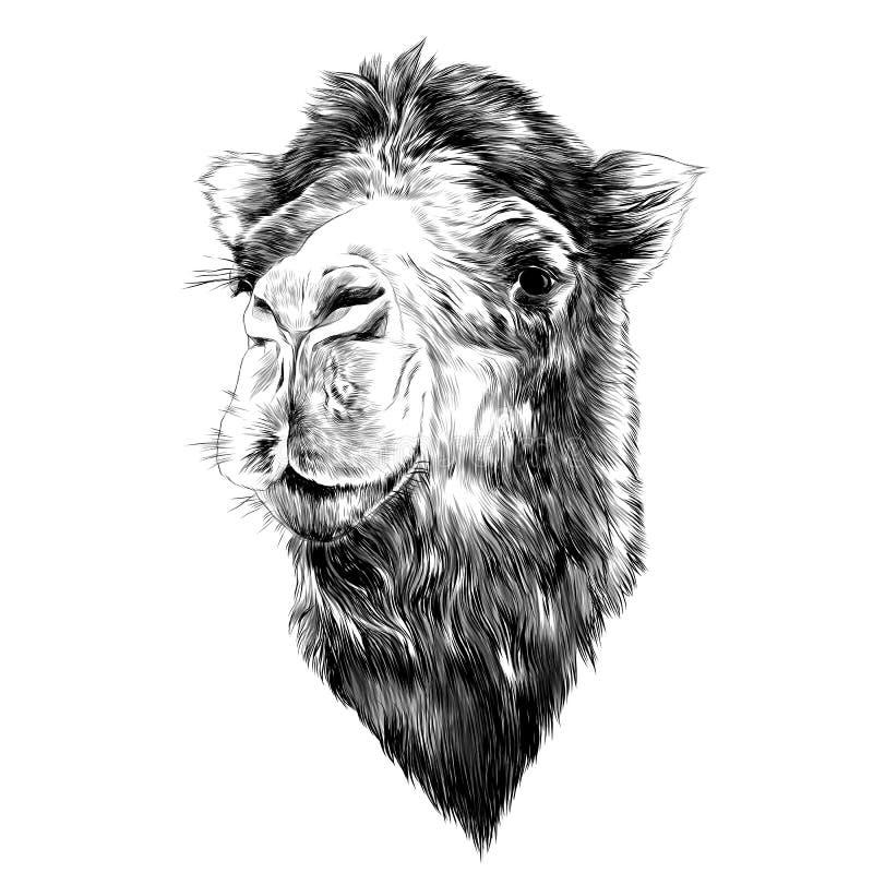 Free Head Camel Royalty Free Stock Photos - 90239688