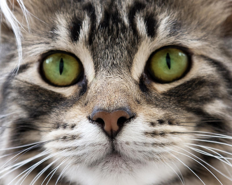 Head of cat stock images