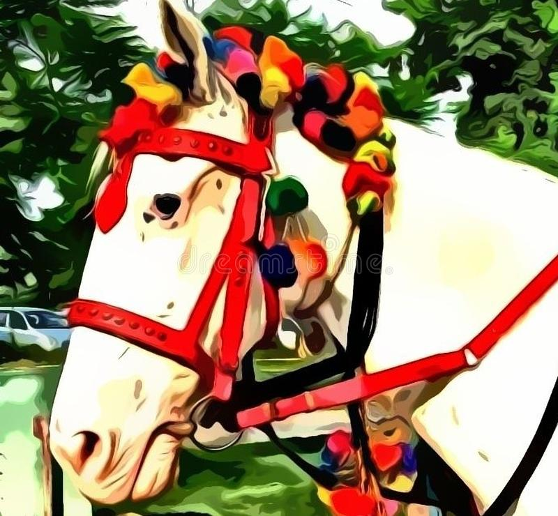 Head of Decorated White Horse royalty free stock photo