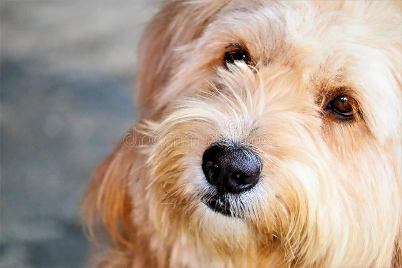 Head a dog and brown eyes. Is looking stock photos