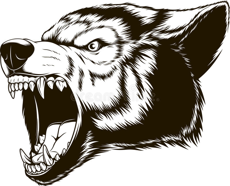 The head of the ferocious wolf royalty free illustration