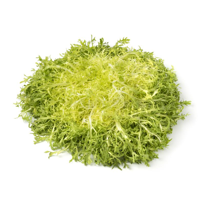 Head of fresh frisee lettuce royalty free stock images
