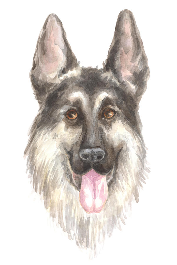 Head of the German shepherd royalty free illustration