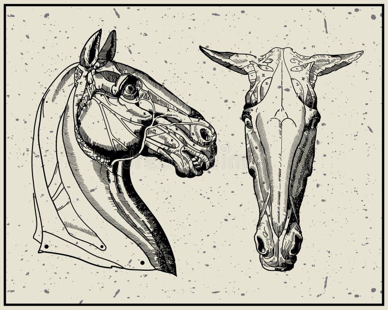 head häst stock illustrationer