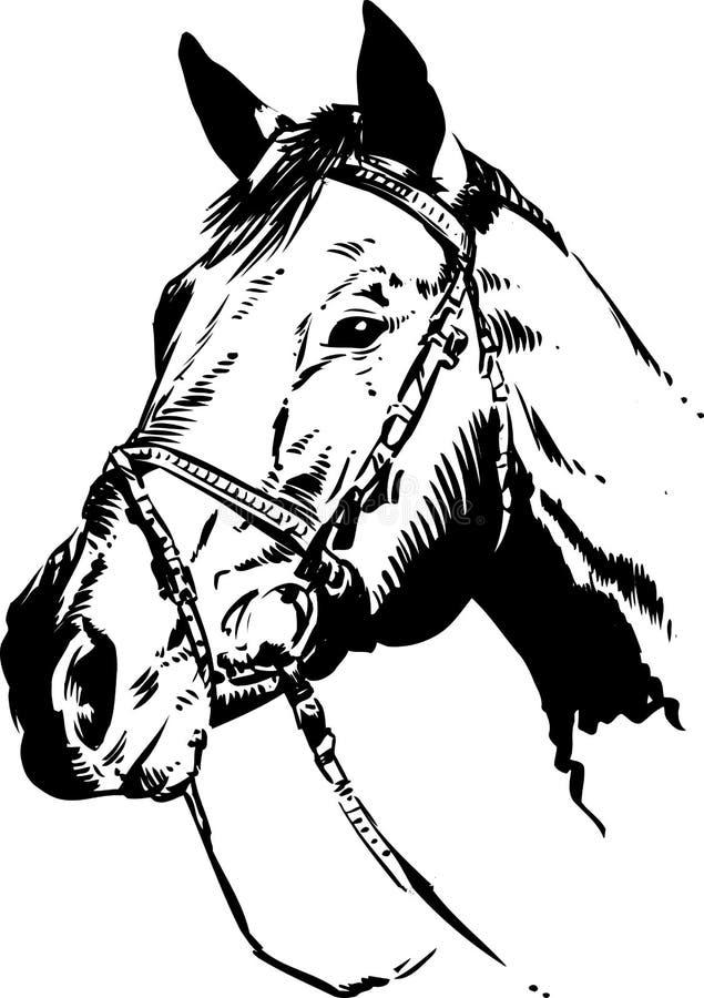 head häst royaltyfri illustrationer
