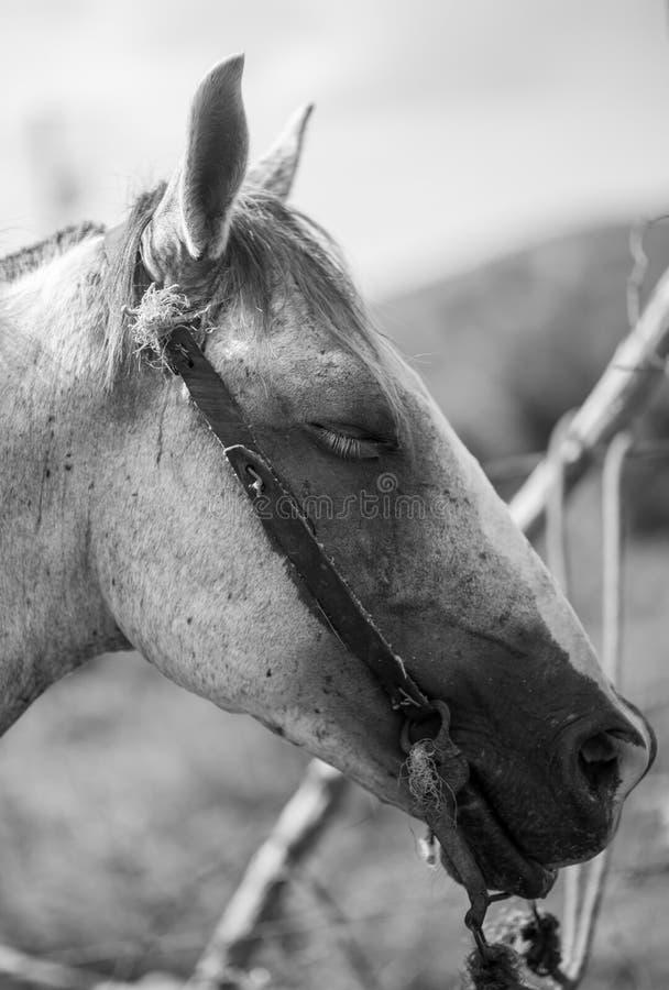 head häst royaltyfri foto