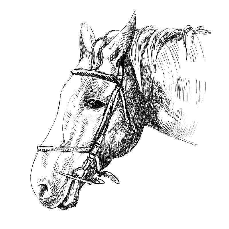 head häst vektor illustrationer