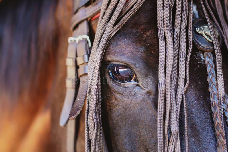 head häst för closeup royaltyfria bilder