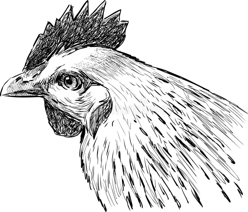 Download Head of hen stock photo. Image of portrait, hand, drawn - 31902434