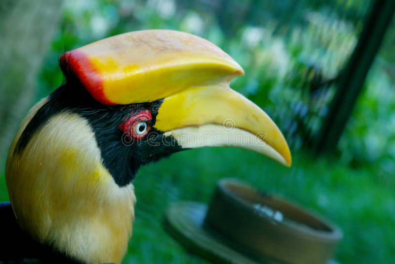 Download Head of hornbill stock photo. Image of bill, black, nature - 1767944