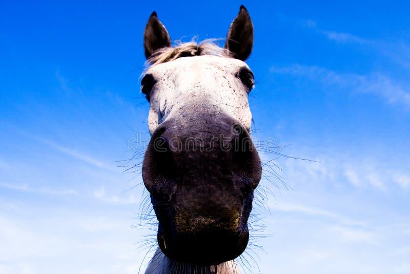 Head of horse stock photography