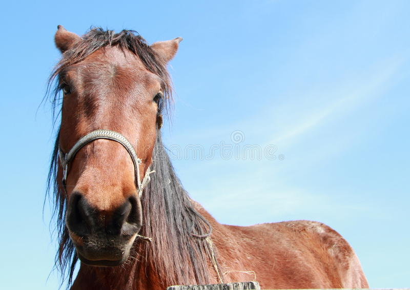 Head of a horse stock image