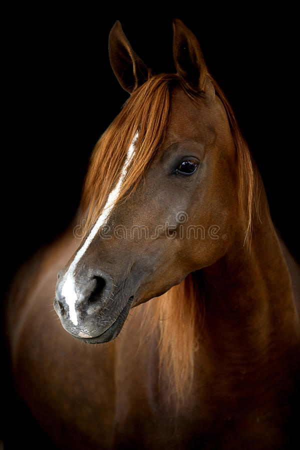 A head of a horse against a black background stock photos