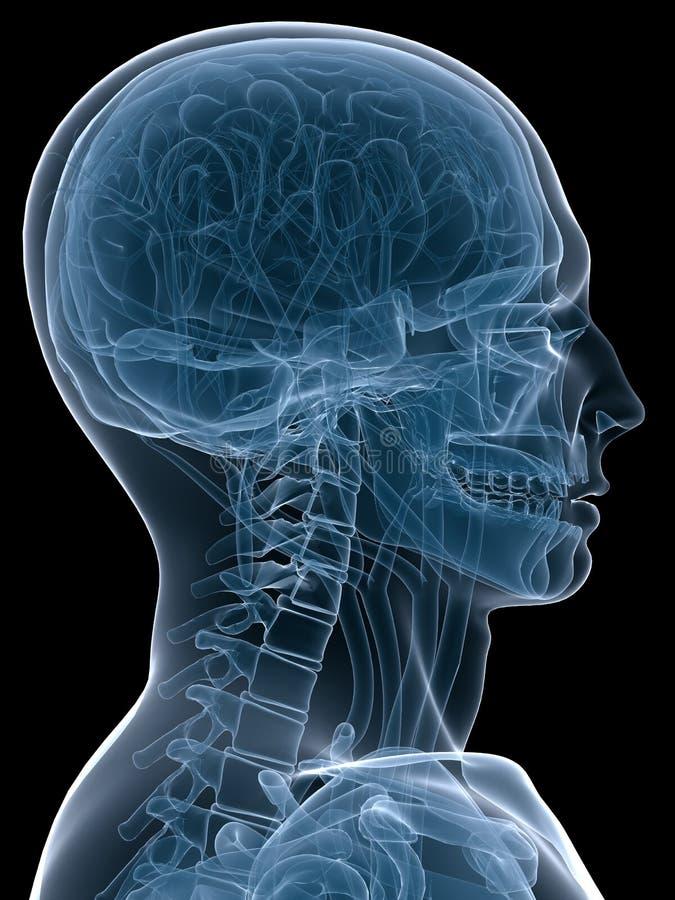 head human vektor illustrationer