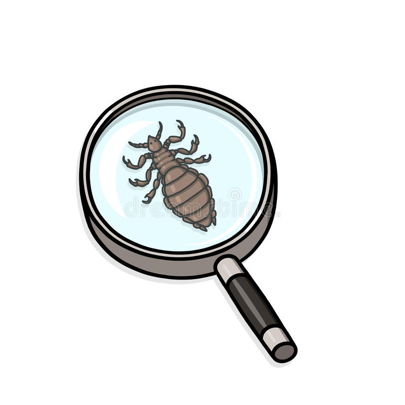 Head lice under magnifying glass stock illustration