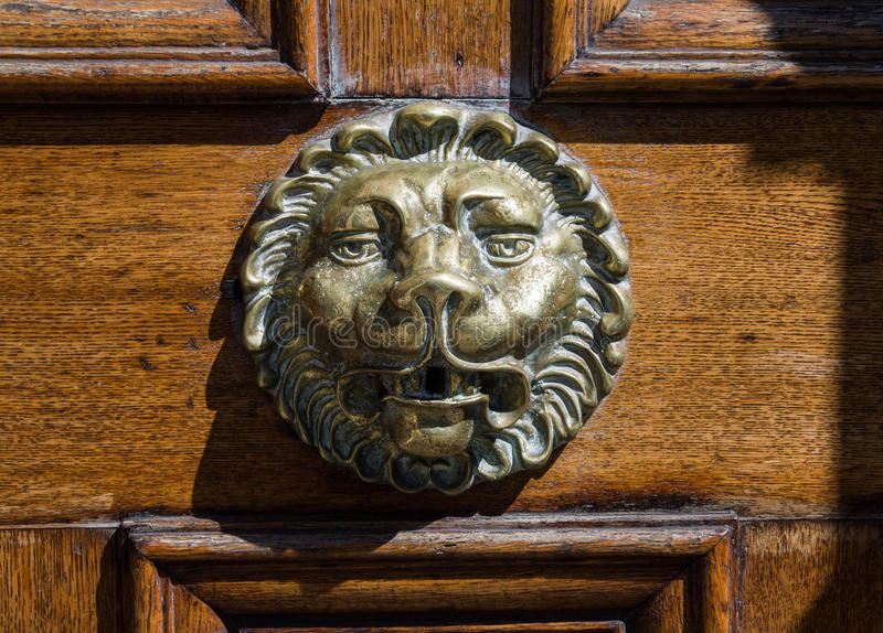 Head of Lions royalty free stock image