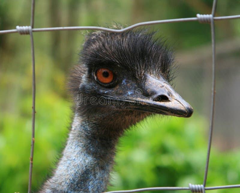 head ostrich arkivfoto