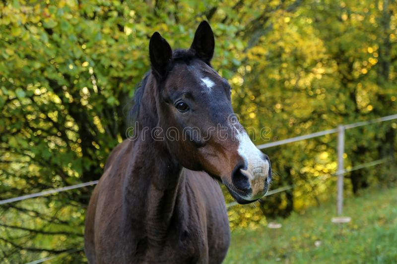 Head portrait of a beautiful brown horse stock photo