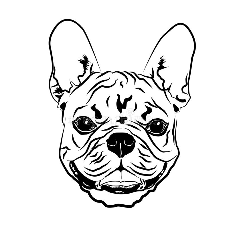 Head portrait contour outline, sketch of French Bulldog dog silhouette vector illustration. royalty free illustration