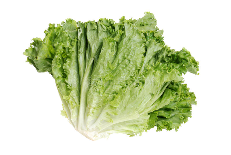 Download Head of roman leaf lettuce stock photo. Image of leaves - 15579920