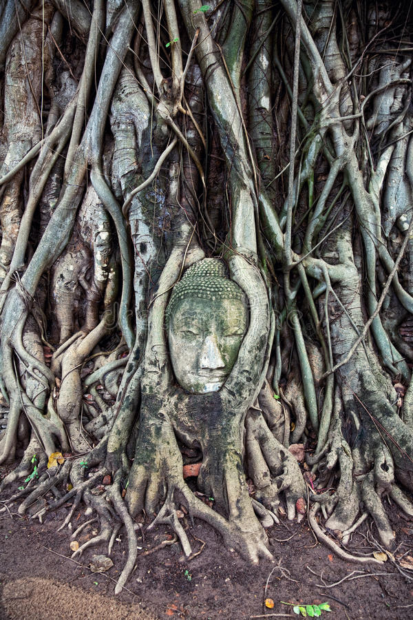 Download Head Of The Sandstone Buddha Stock Photo - Image: 22353270