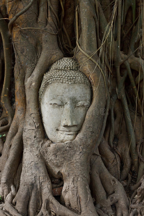Download Head Of Sandstone Buddha In The Bodhi Tree Roots Stock Photo - Image of pray, ancient: 26622564